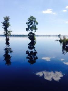 Dismal_Swamp_AUG