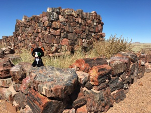 ...in the Petrified Forest