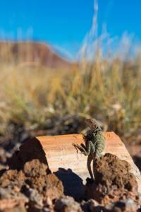 A lizard on a piece of petrified wood