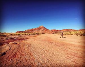 A 'wash' in the petrified forest wilderness