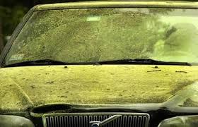 pine-pollen.jpg
